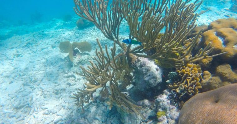 Snorkeling Wonders of Barrier Reef in Belize