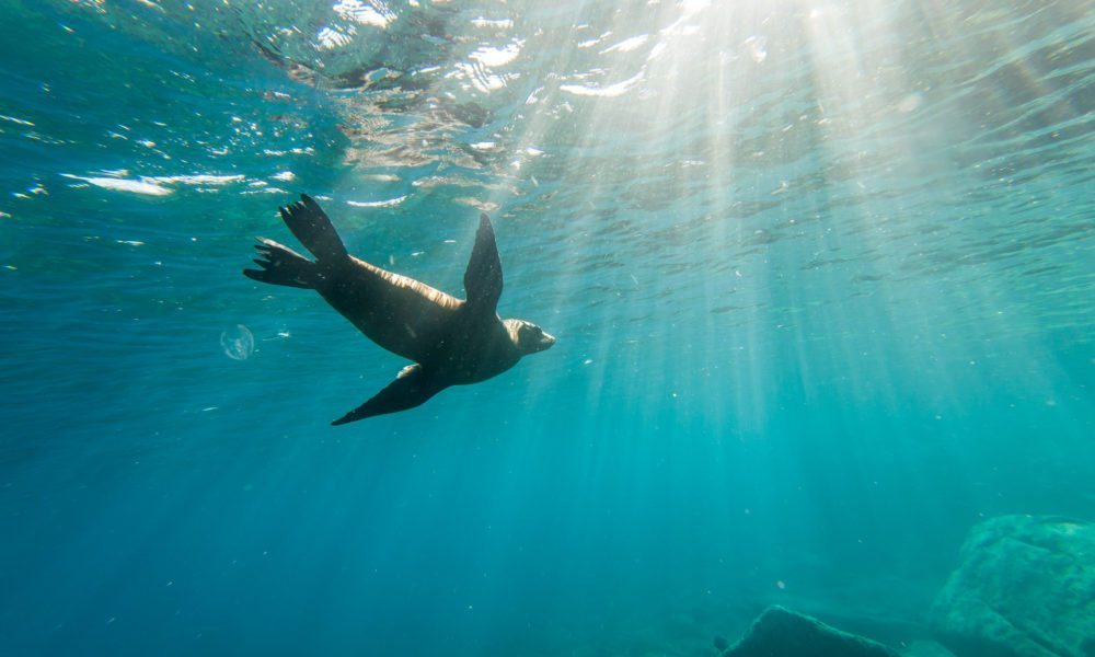 Holland America Premieres 'Planet Earth II in Concert'