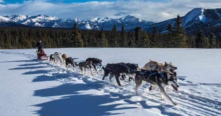 Visiting Denali National Park and Preserve in Alaska