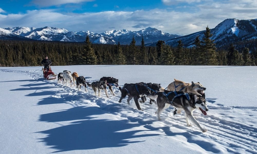 Visiting Denali National Park and Preserve in Alaska