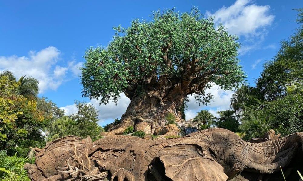 Travel During A Pandemic: Disney's Animal Kingdom