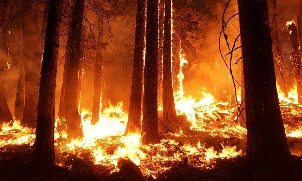 Carnival Donates $1.25 Million to Australian Wildfire Recovery